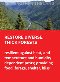 1-restore-forests