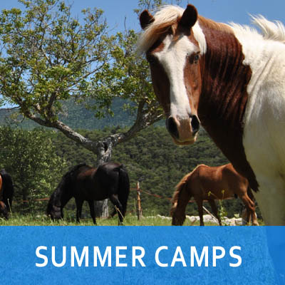 YEAR-CAMPS2